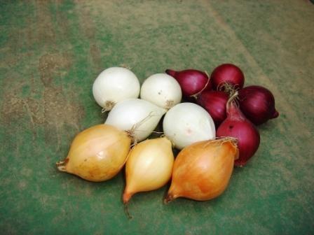 Когда и как сажать лук-севок
