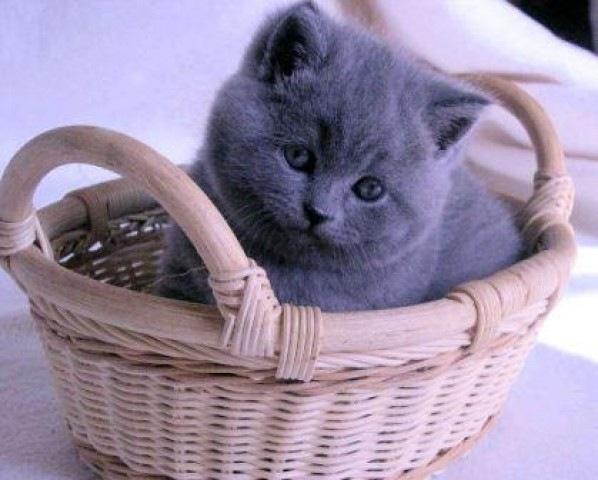 имя для кошки девочки: