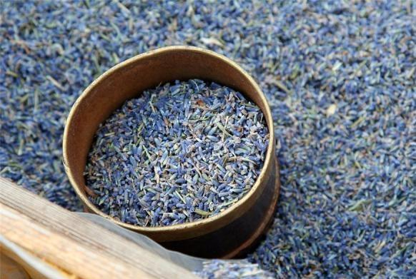 Семена лаванды в домашних условиях 925