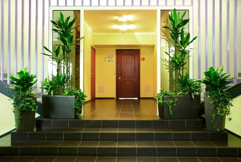 теневыносливые комнатные растения с
