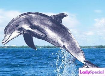 Рисунок карандашом дельфина для начинающих