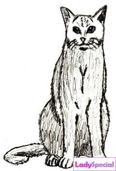 Пятый этап рисования кота