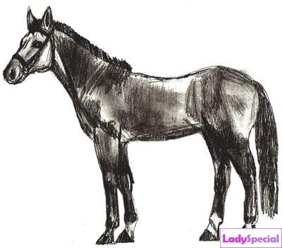 Шестой этап рисования лошади карандашом