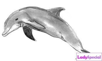 Пятый этап рисования дельфина