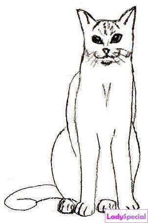 Четвертый этап рисования кота