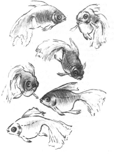 Для аквариума картинка 9