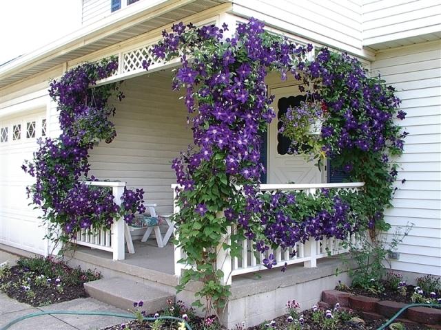 Фото растения на даче