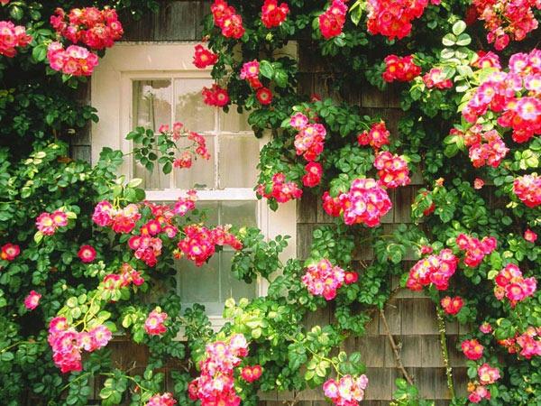 Какие бывают вьющиеся цветы