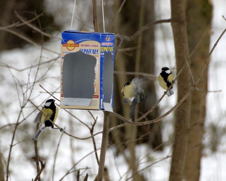 Виды кормушек для птиц своими руками фото