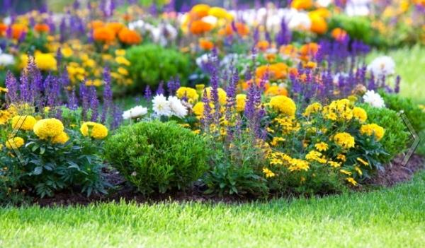 Схемы клумб непрерывного цветения