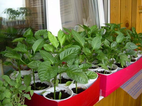 Когда сажать семена на рассаду? Выращивание овощей и цветов рассадой
