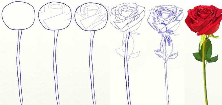 Как нарисовать карандашом красивую розу поэтапно