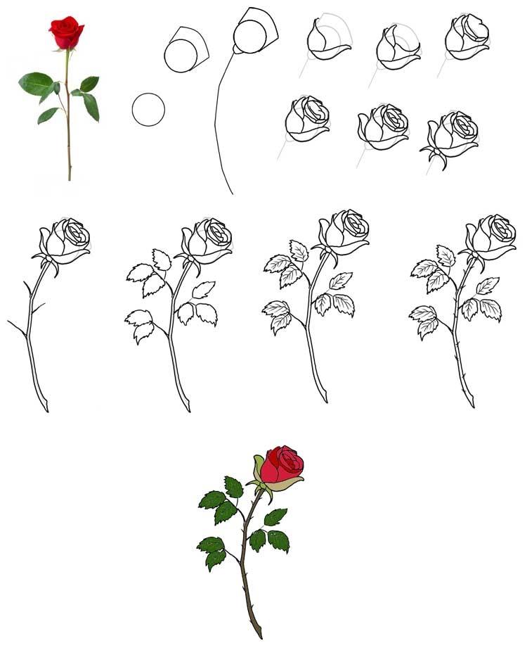 Как научиться рисовать розу карандашом для начинающих