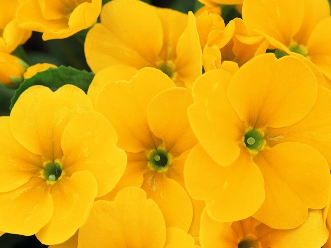 Цветы желтого цвета. Названия и описание растений с желтыми цветами