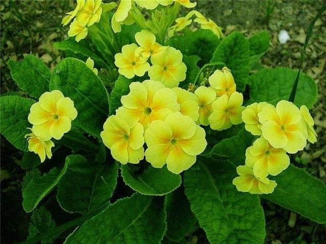 Цветы в саду  название