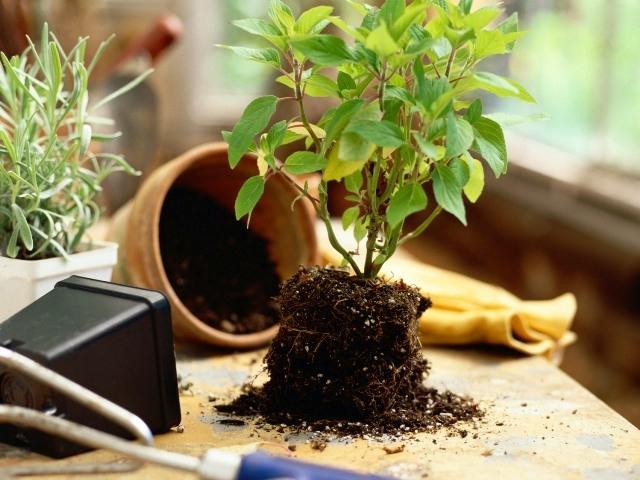 Выращивание комнатные растения 32