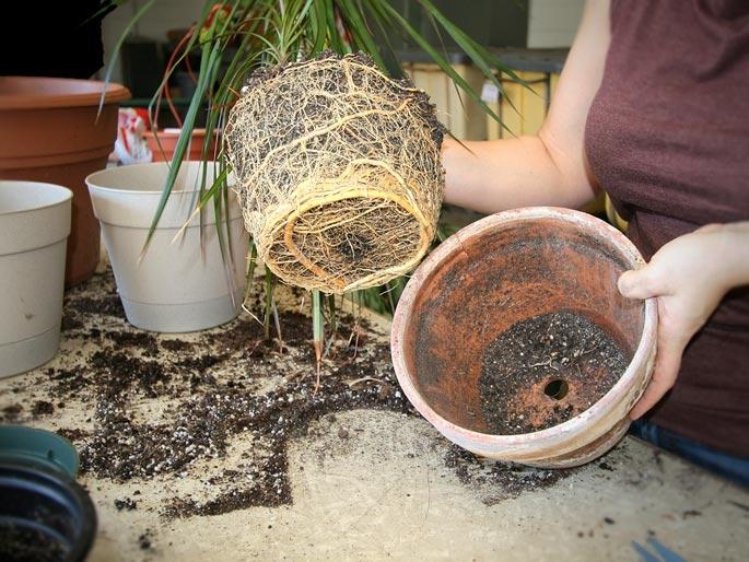 В какие горшки лучше сажать домашние цветы 17