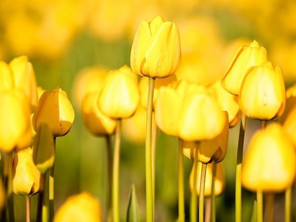 Жизнь в желтом цвете (4 фото) - elLf houSE