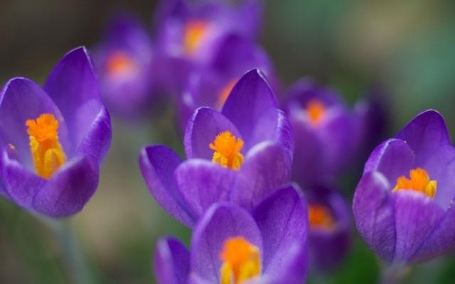 Название и фото летних цветов