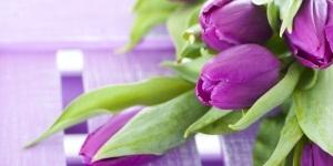 Растение с фиолетовыми цветами название