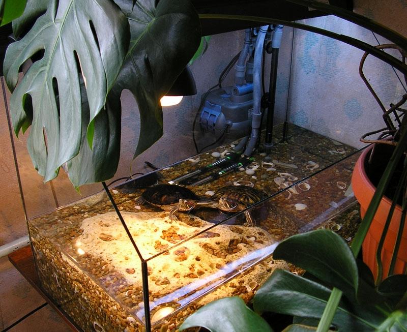 Обустраиваем аквариум для красноухой черепахи своими руками 46