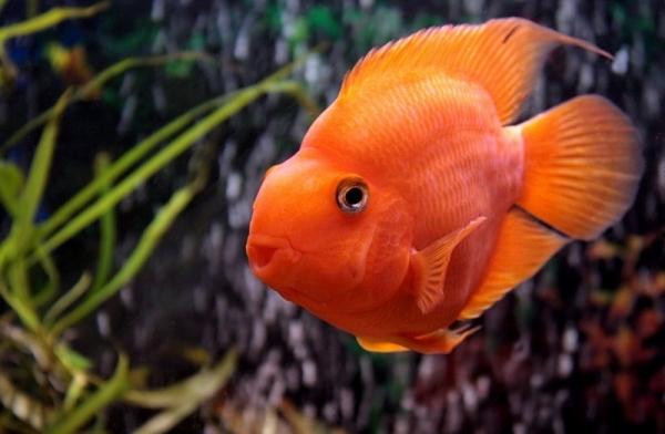 Совместимость аквариумных рыбок: правила