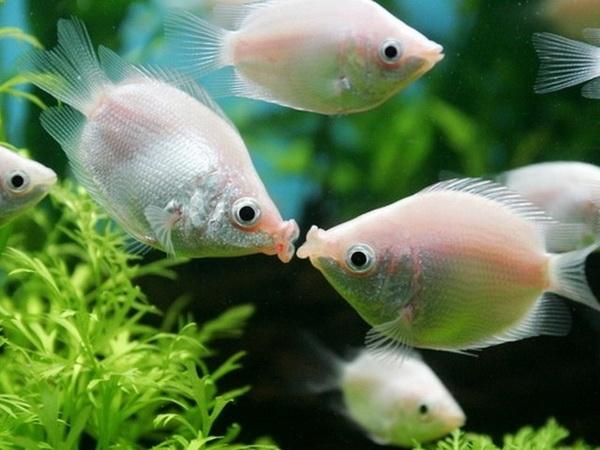 типы рыб фото