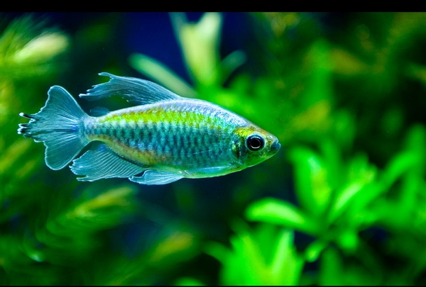 фото аквариумных рыбок все виды и названия