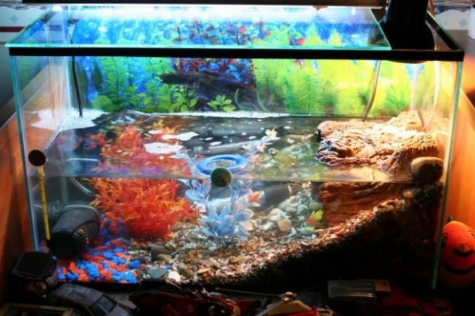 Аквариум для красноухой черепахи фото своими руками
