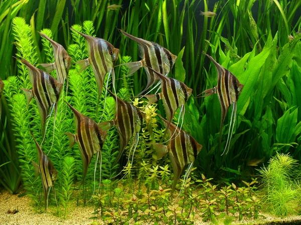 Скок каментов совместимость аквариумных рыбок: правила идея своевременно