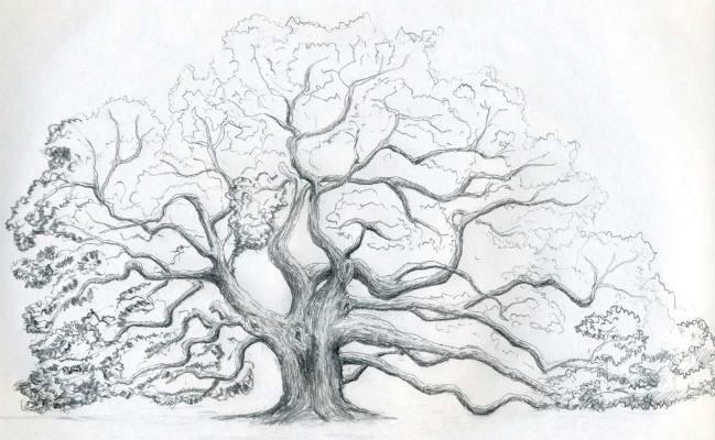 Как нарисовать дерево: