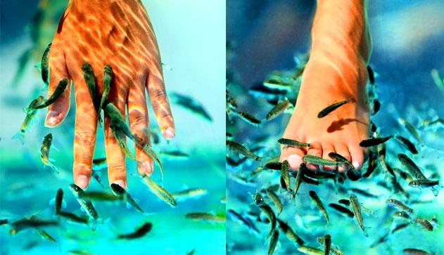 Лечение псориаза рыбками