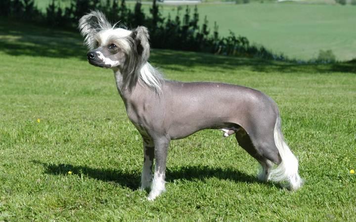 Все породы собак c ФОТО, Ценами, Рейтингом и