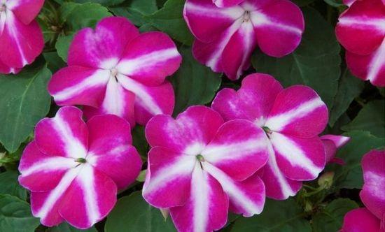 Самые неприхотливые комнатные цветы с фото цветущих