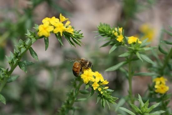 Гелиотроп: выращивание и фото цветка