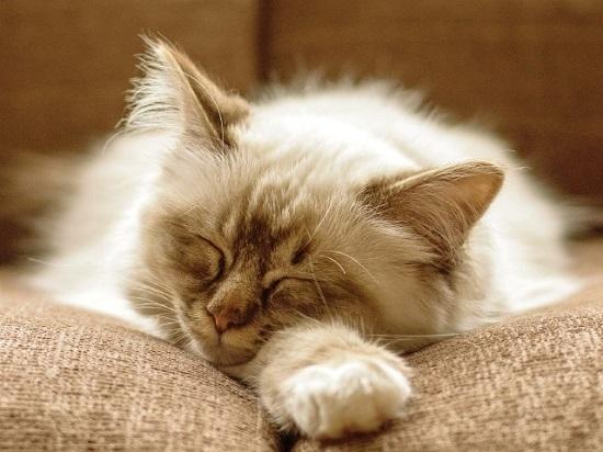 стригущий лишай у кошек:
