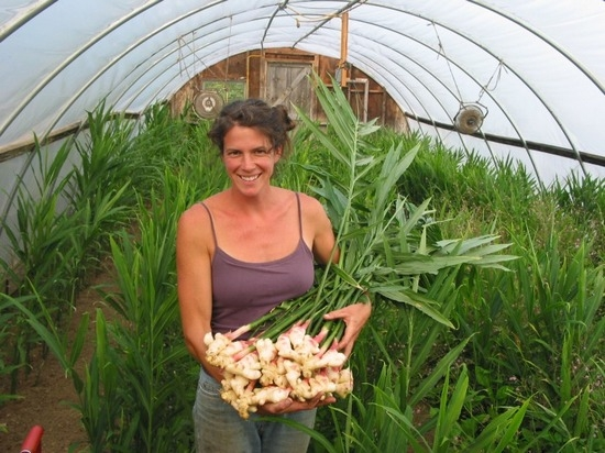 how to grow ginger in farm