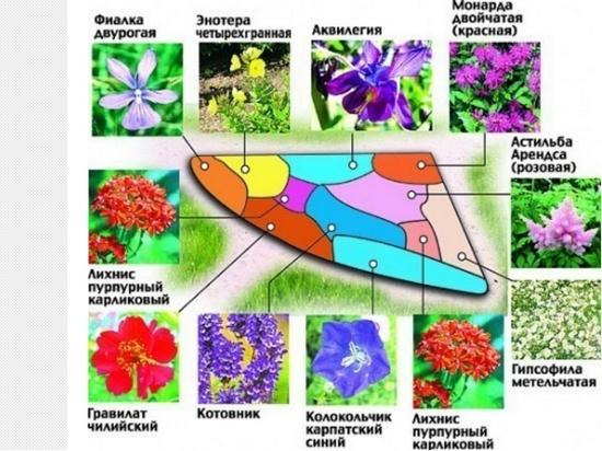 растений, начертите схему