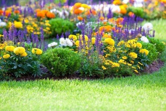 Правила создания цветника и
