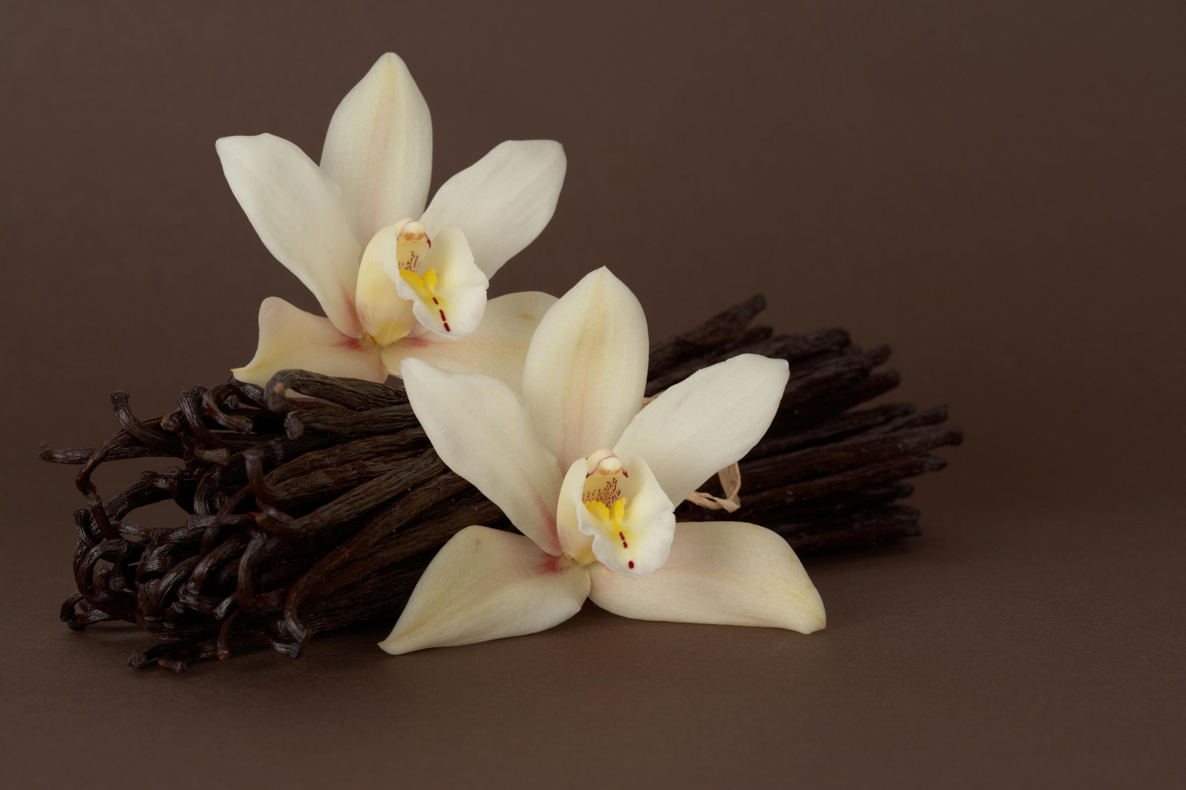 Цветок с запахом ванили фото