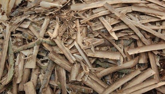 настойка коры осины от паразитов