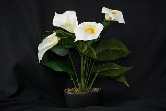 Каллы цветы смерти фото
