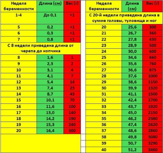 Размеры эмбриона по неделям беременности таблица