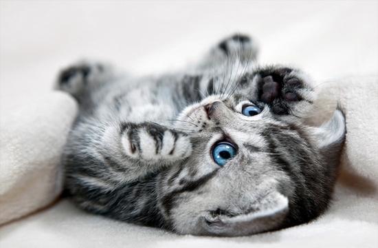 Как назвать дымчатого кота мальчика