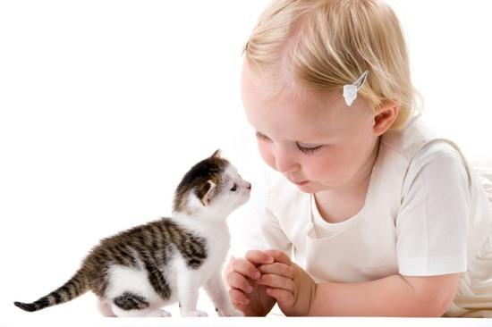 прикольные клички котов