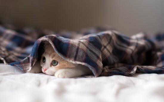 Русские прикольные клички для котов мальчиков