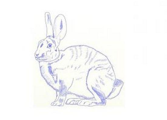 """Рисунок """"Настоящий заяц"""""""