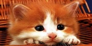 Как можно назвать котенка рыжего цвета мальчика