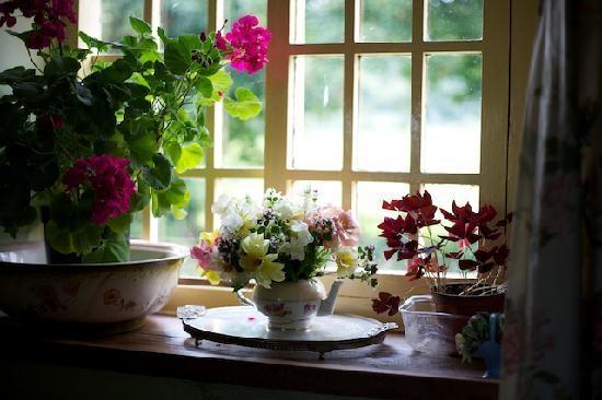 Какие комнатные цветы цветут круглый год?