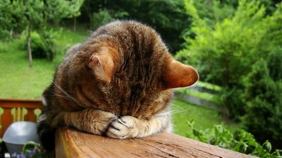 У котенка гноится глаз что делать